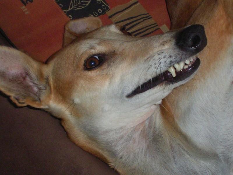 Un sourire de TERRY
