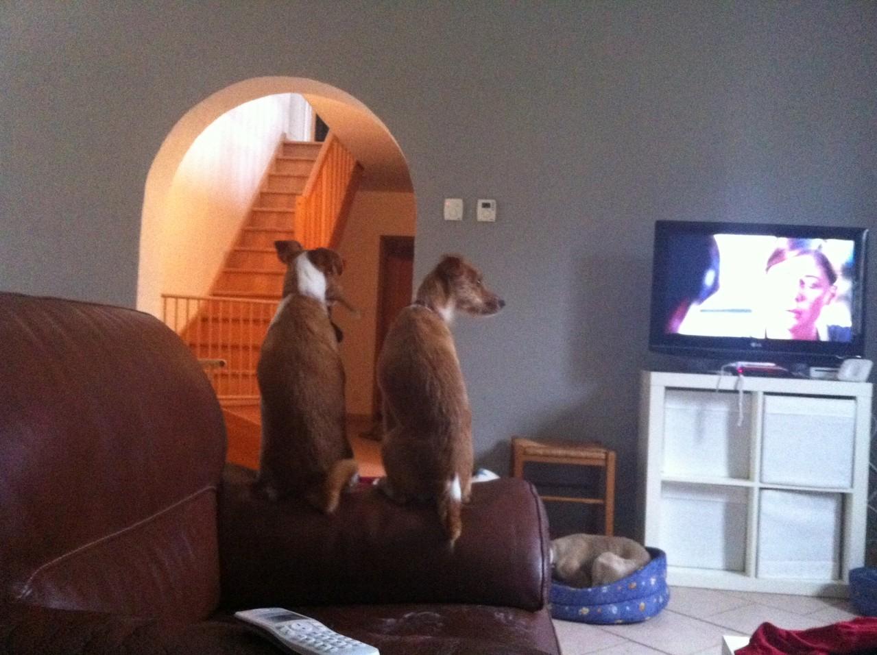 Chut ! ROSALIE et GRACE regardent la télévision