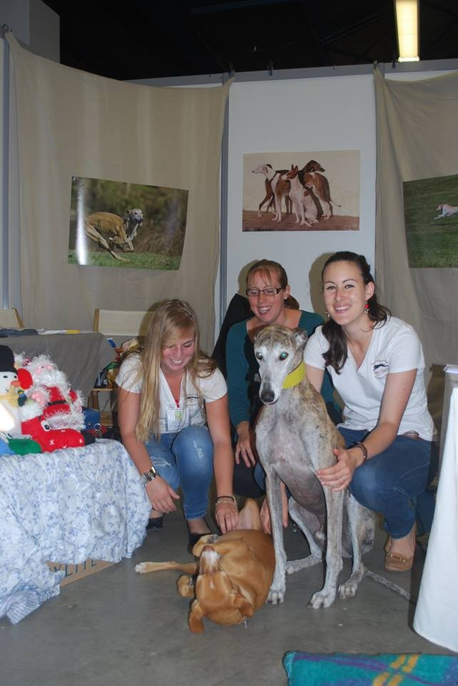 "Photo de l'association de sauvegarde des dogues allemands ""dogueallemandnotre """