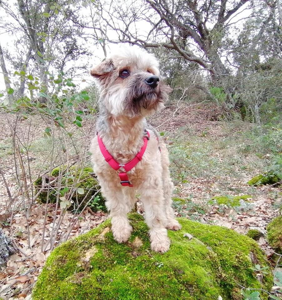 ALO - 12 ans et demi - sourd - chien calme, aime les enfants