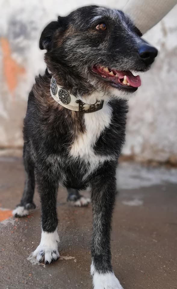 LUISA - 5 ans et demi - un amour de chienne