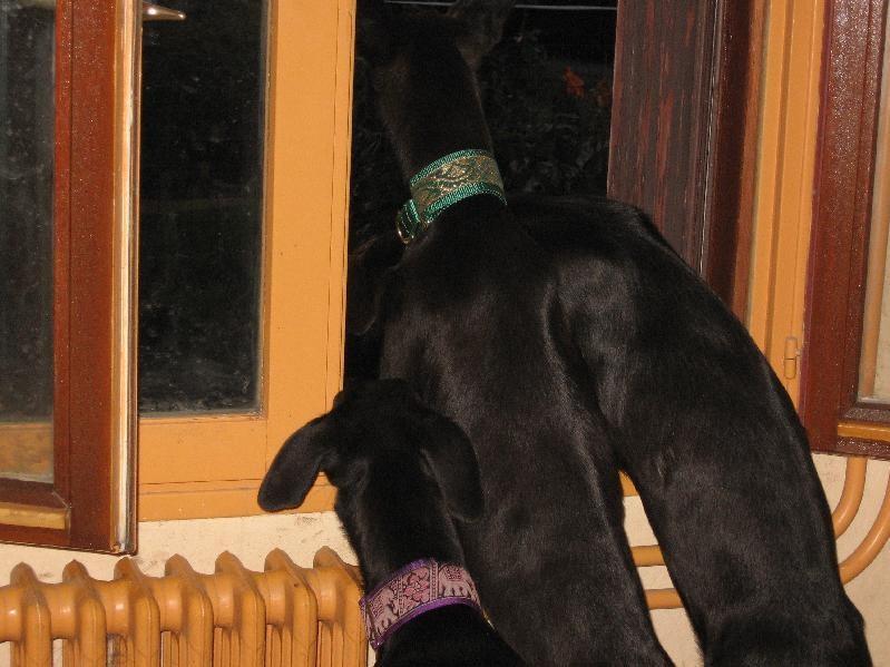 BLACKY, HIDALGO et EBANO...  Trois concierges à leur balcon !!!!
