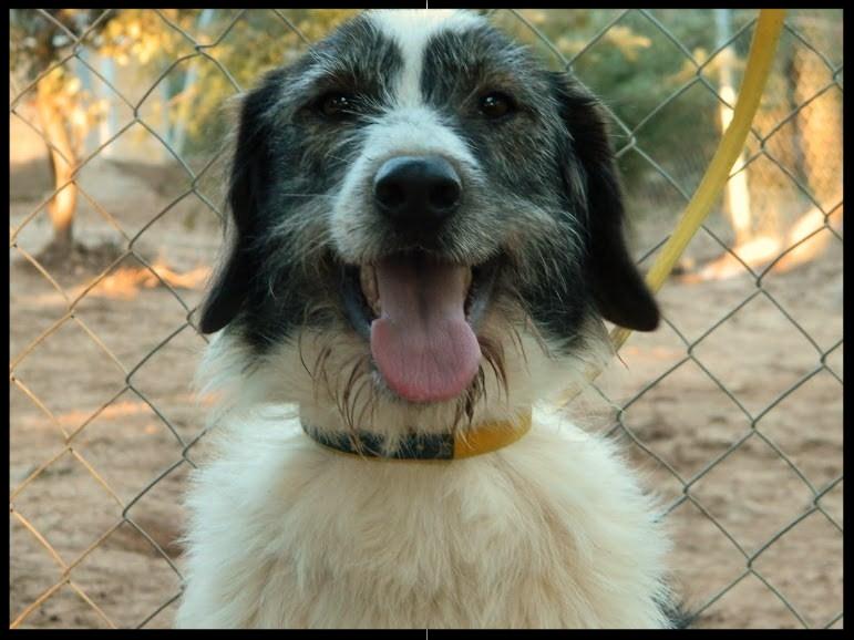 Sorti ou l 39 histoire d 39 un amour de chienne qui cherche for Amour de cuisine chez soulef 2012
