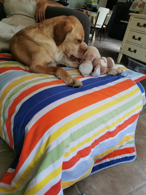 Avec son doudou sur le canapé.