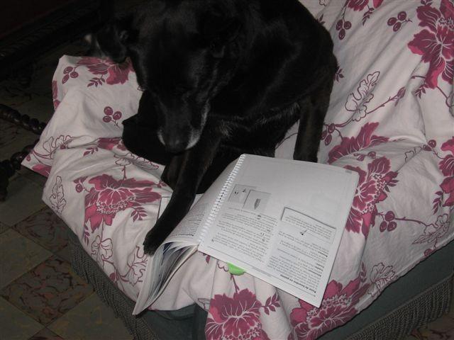 Tu seras gentille de ne pas me déranger, je lis le journal ! MARYSOL (Dominique S.)