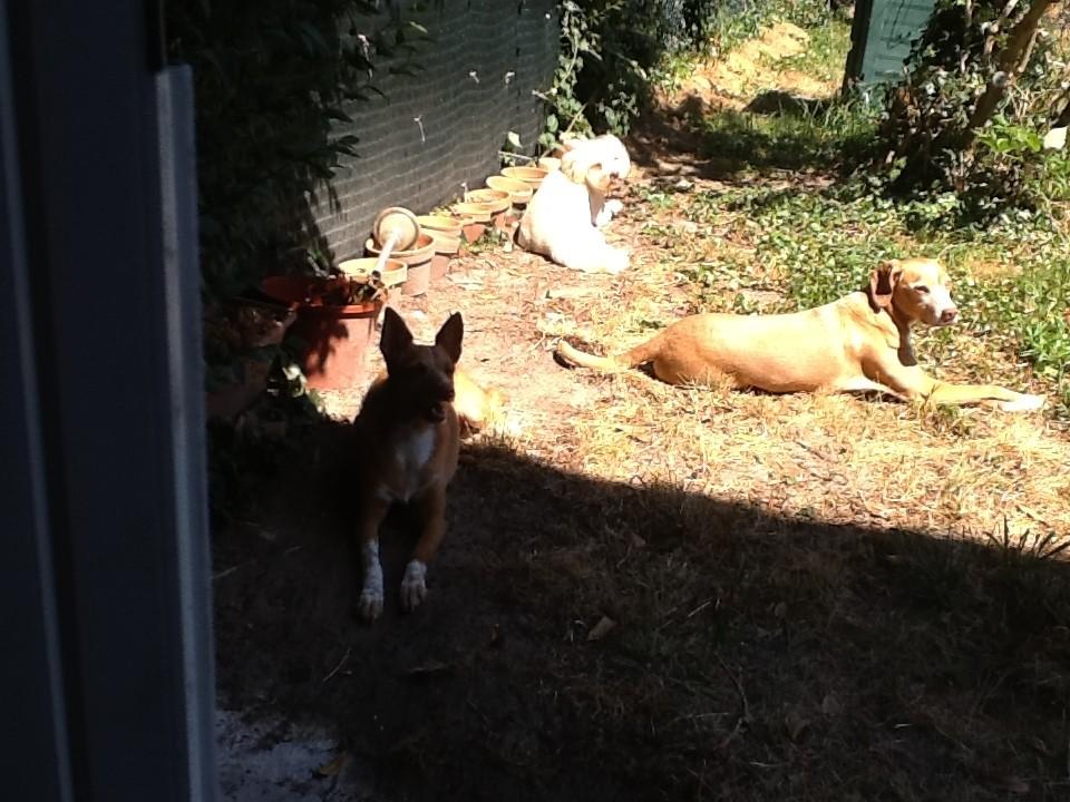 Ricou, Dayko et Brigitte