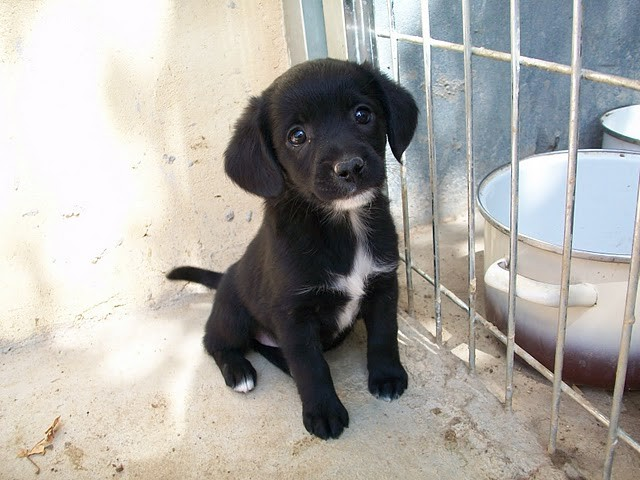 ZACHA en cours d adoption