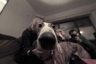 Non non non j'ai pas un gros nez! non mais oh! (Spike)