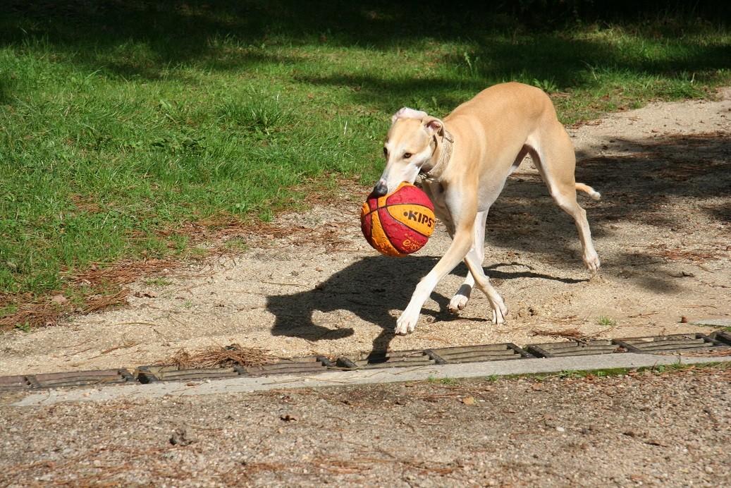 Tu veux le ballon…. hop hop hop viens le chercher… !! SKY