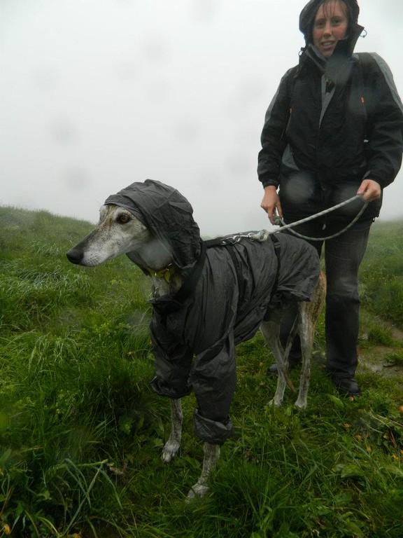 J'aime pas la pluie.... et mes adoptants l'ont bien compris!!! CHARCO
