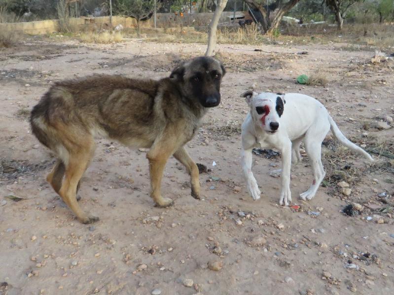 Skelly et Landa