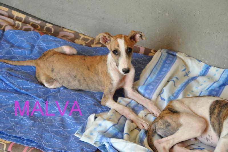 MALVA en cours d adoption