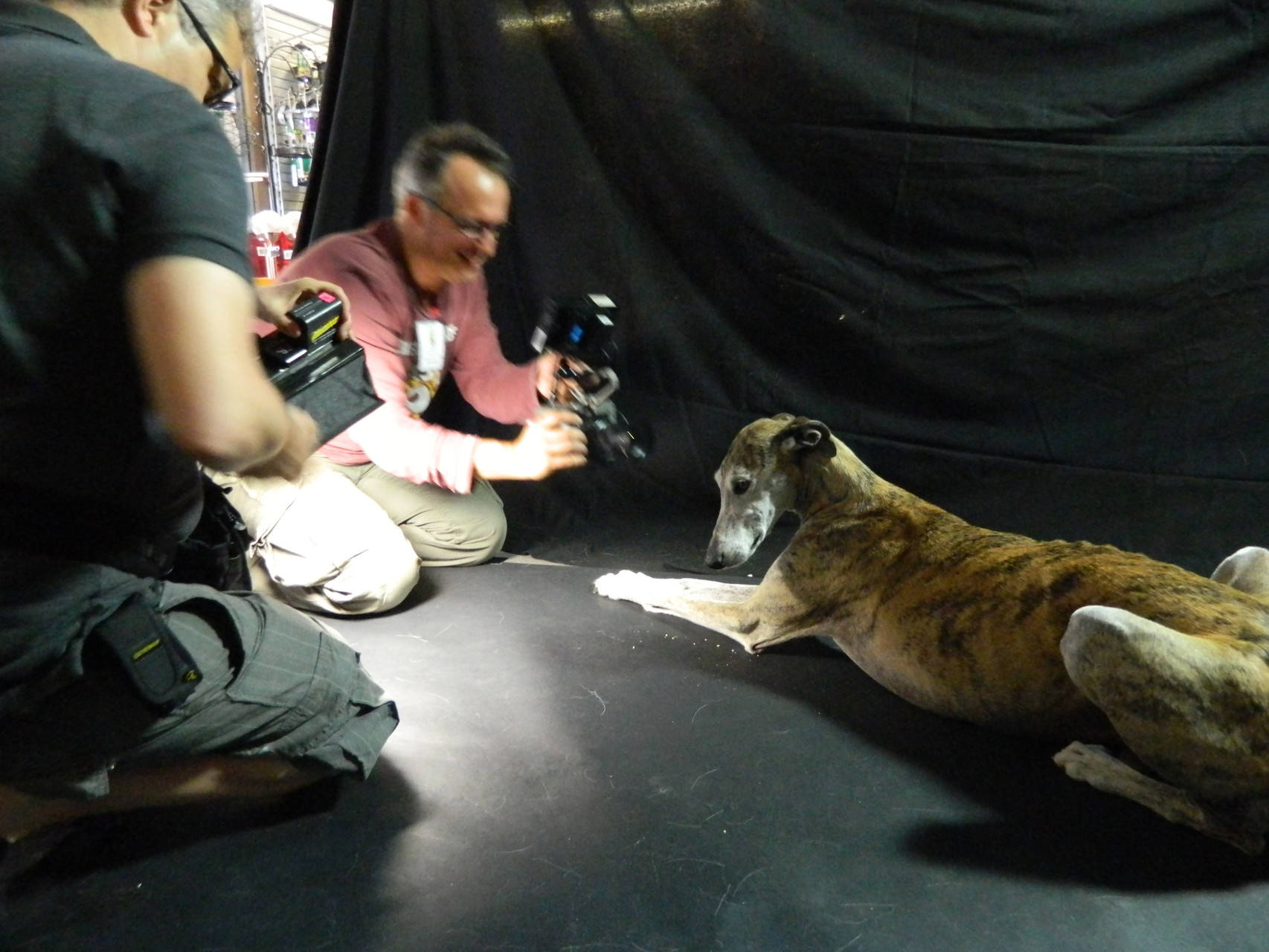Le salon du chien à Paris où tu as fièrement représenté GF