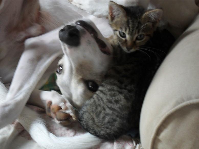 La tendresse et l'amitié selon MUTI et sa petite copine CALI
