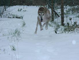 La découverte de la neige.
