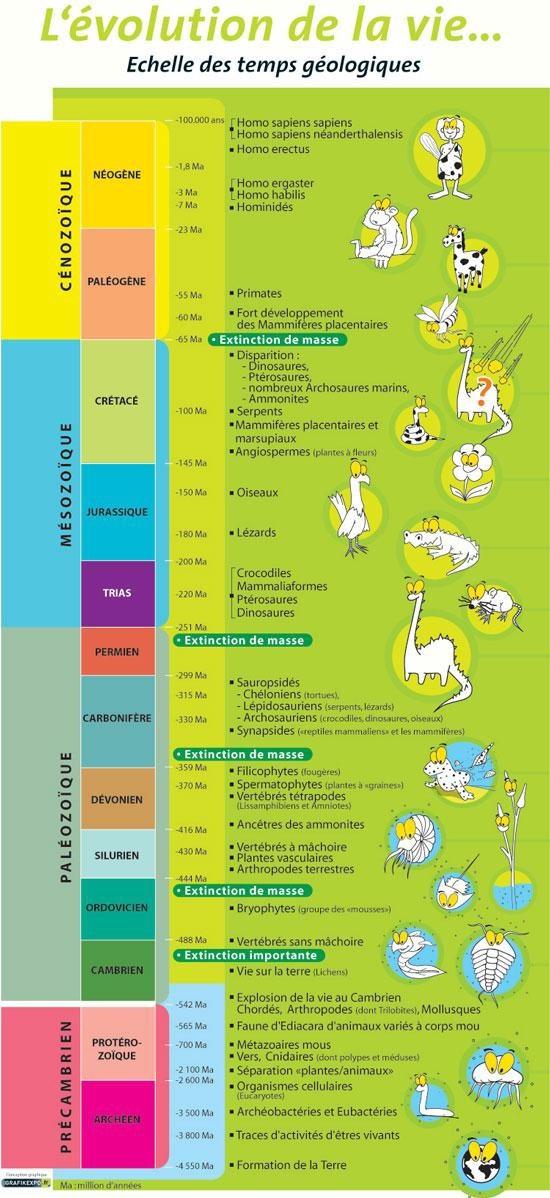 Echelle des temps géologiques simplifiée avec principales apparitions et évolutions de la Vie. Source: internet ??