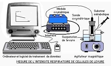 Dispositif ExAO utilisé pour étudier les levures. Source: http://svtmarcq.e-monsite.com/pages/la-respiration-1-spe.html