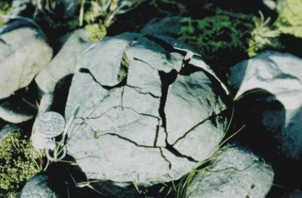 Effets du gel sur une boule de granite. Reparquez les failles qui se sont élargies sous l'effet du gonflement de la glace. Sources;  ULG