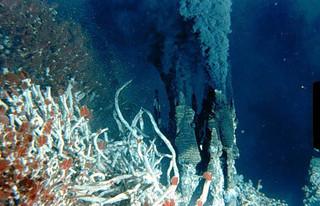 Vie marine inféodée aux fumeurs noirs.  Des vers (rouges et blancs) sont visibles à gauche du fumeur noir.