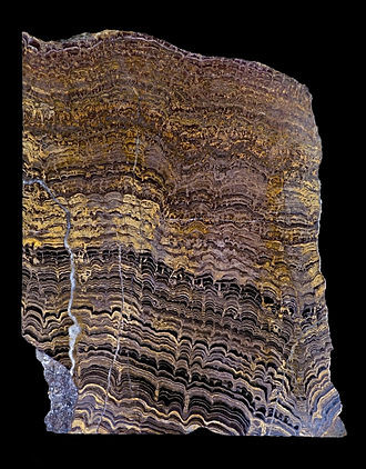 Coupe d'une roche montrant la trace fossile de stromatolithes et sédiments intermédiaires datant du Protérozoïque. Source: wikipédia