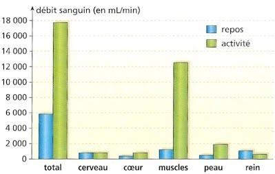 Débit sanguin au niveau des principaux organes entre le repos et l'effort.
