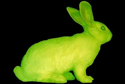 Lapin fluorescent. Source: internet.