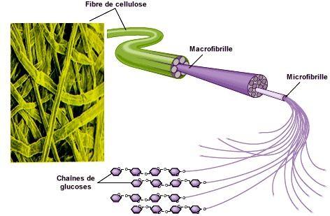 Microphotographie de cellulose et détails de ses constituants (de nombreuses molécules de glucose reliées en microfibrilles. Source: internet.