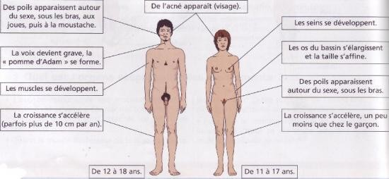 Principales modifications du corps chez le garçon et la fille lors de la puberté. Sources: http://s4.e-monsite.com/