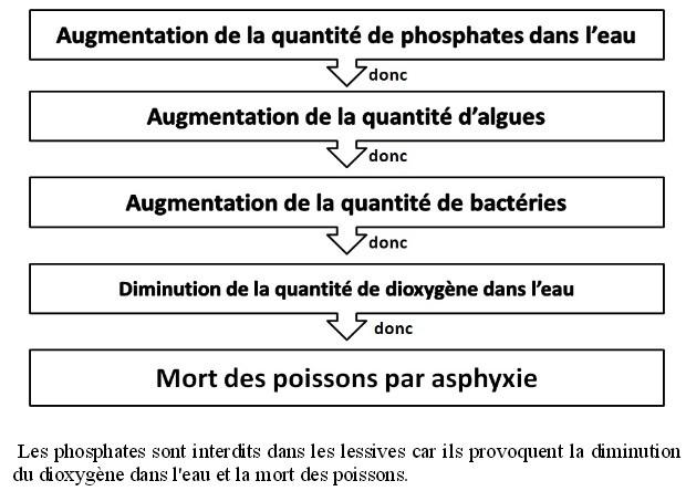 Un exemple de réactions en chaine après ajout d'un polluant (ici les phosphates encore présents dans certaines lessives).