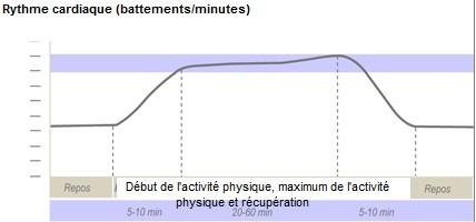 Variation du rythme cardiaque au cours du temps. Document personnel.