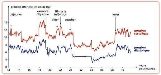 Variations journalières de la pression artérielle chez un homme adulte. Source : SVT Ghediri