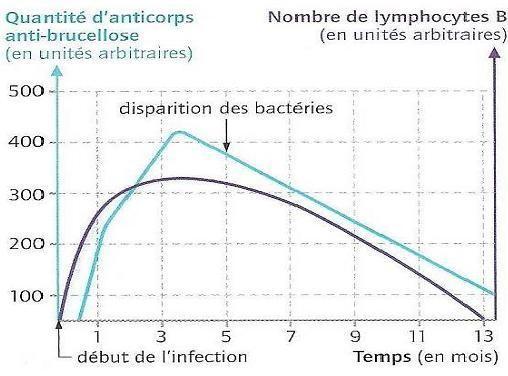 Evolution de la quantité de bactérie de la brucellose et de lymphocytes B au cours du temps. Source: http://clemence-isaure.ecollege.haute-garonne.fr/