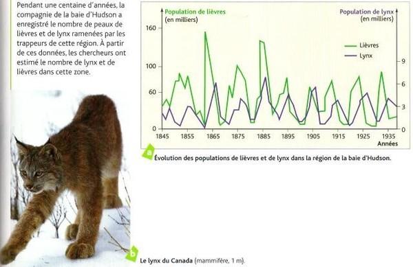 Exemple de l'effet de la prédation des lièvres par le lynx en Amérique du nord sur une grande période de temps. Source: SVT.serret.free.fr