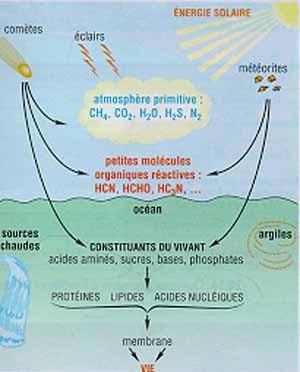 Schéma expliquant la théorie de la soupe primitive. Source: cliquer sur l'image.