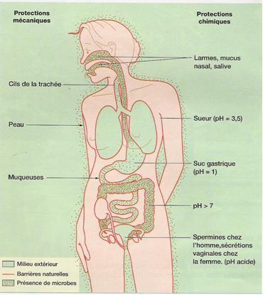 Les barrières naturelles de l'organisme.