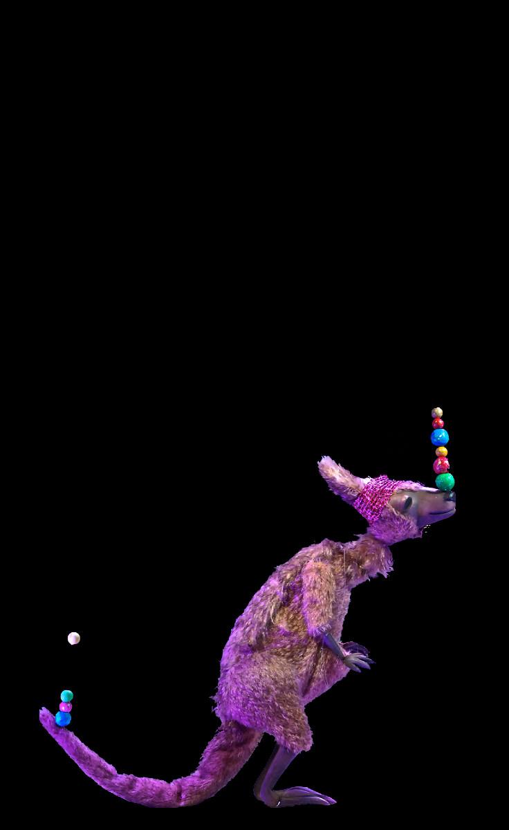 The kangaroo Kokolura juggles.....