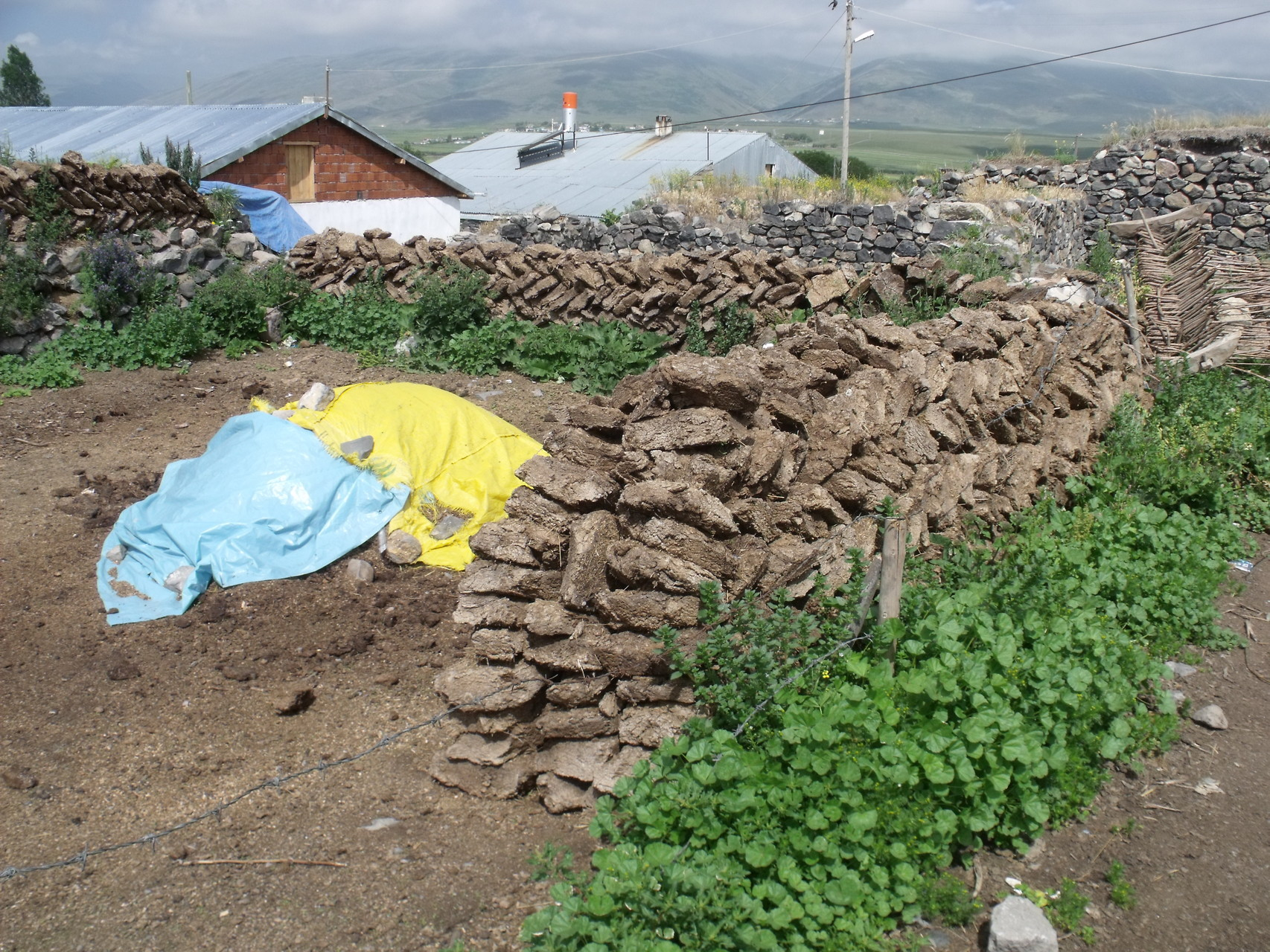 Kuhdung als Brennmaterial in Kurdistan i