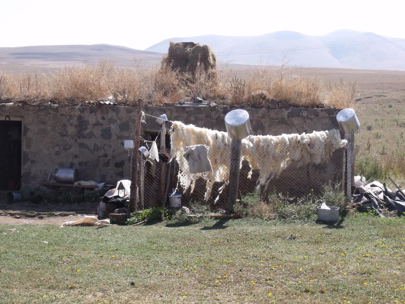 In Kurdistan, Schafsfelle trocknen