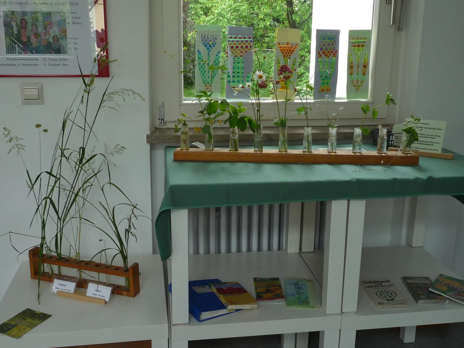 Pflanzenbestimmung: Gräser auf der Sommerwiese