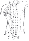 Méridiens Acupuncture