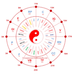 Cycle horaire Acupuncture