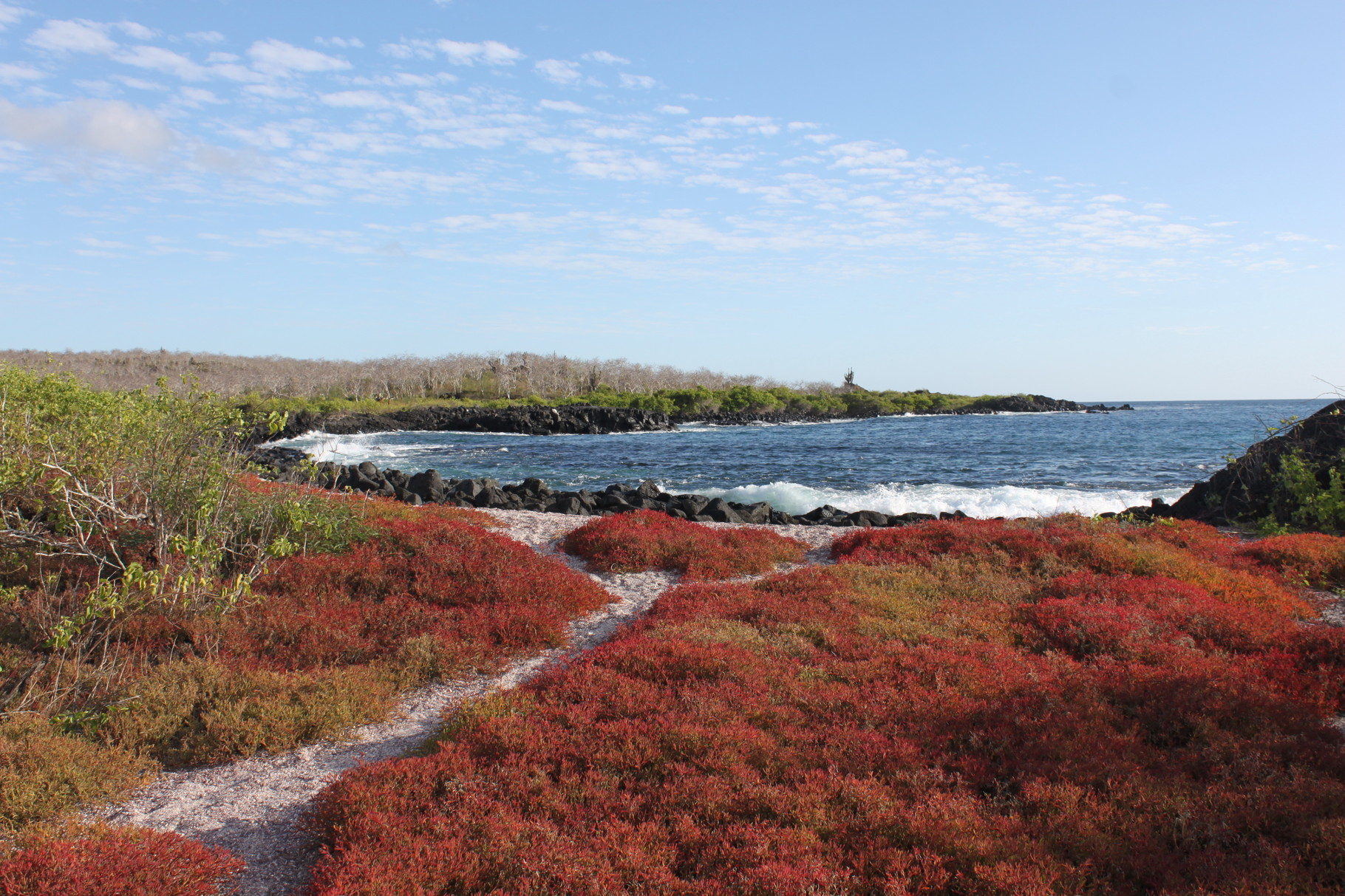 Galápagos Inseln: Insel Floreana