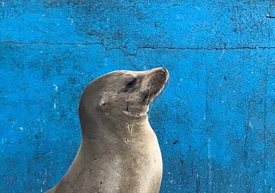 Günstige Kreuzfahrten auf den Galapagos Inseln