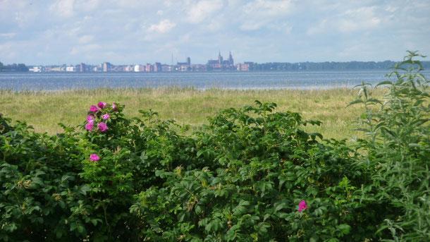 Gartenausblick nach Stralsund
