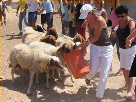 Wir haben es nicht geschafft, die Schafe sind uns ausgebrochen