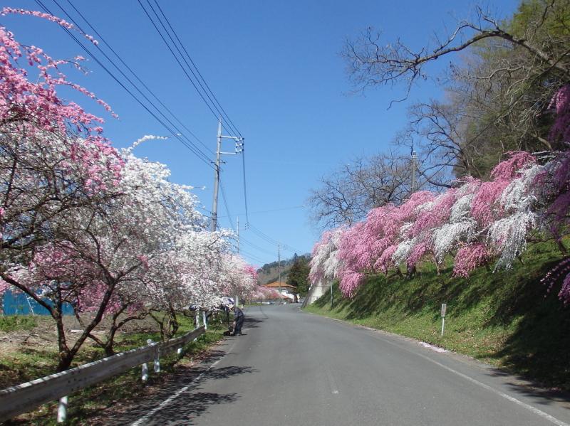 d23-1 大畑の花桃街道