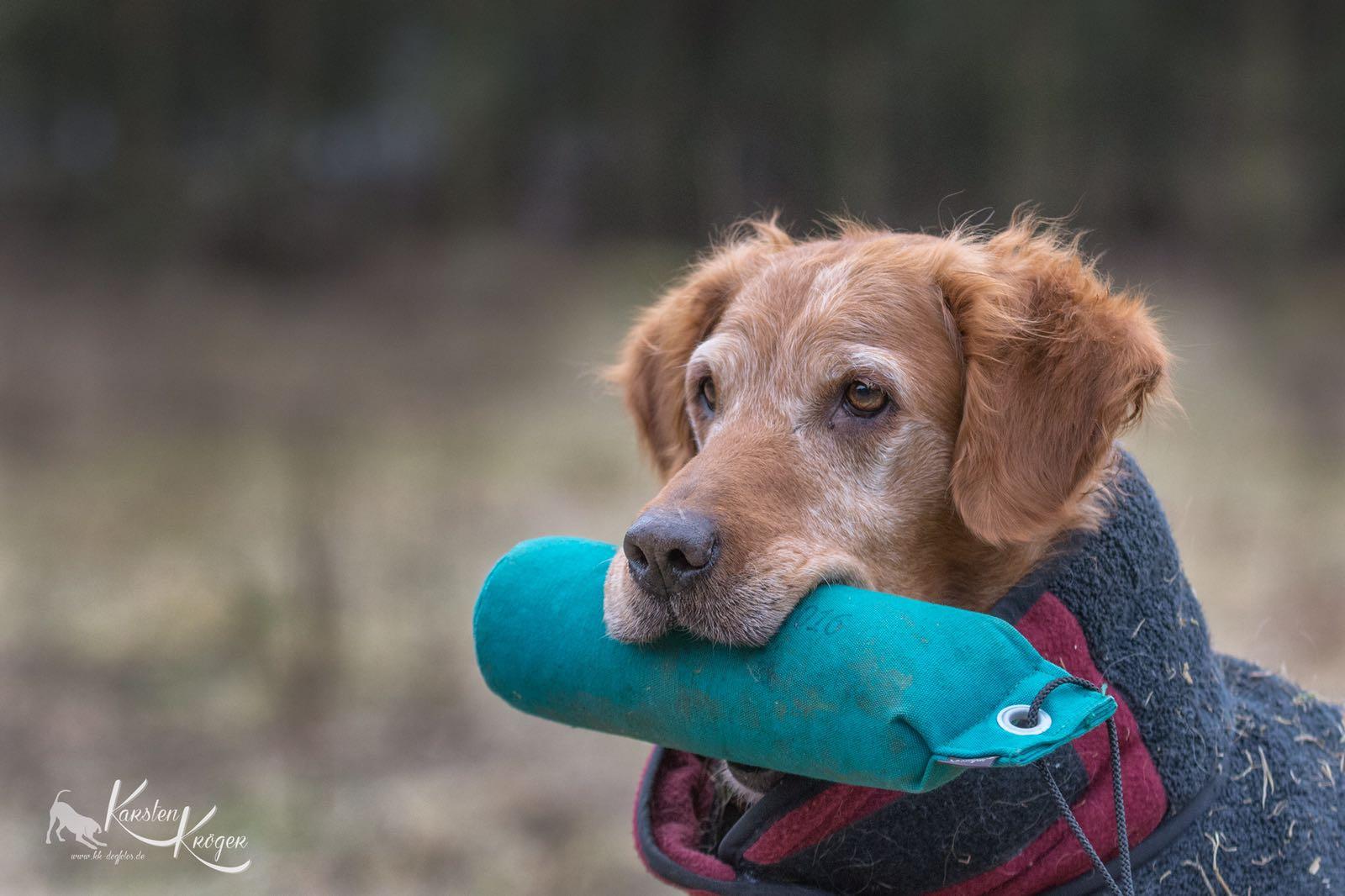 Der Seniorhund