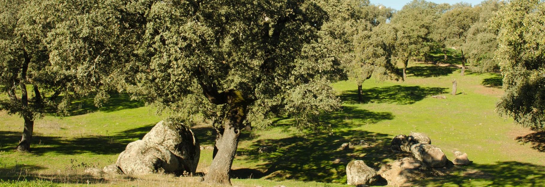 Visita el Valle de los Pedroches. Paraiso Natural.