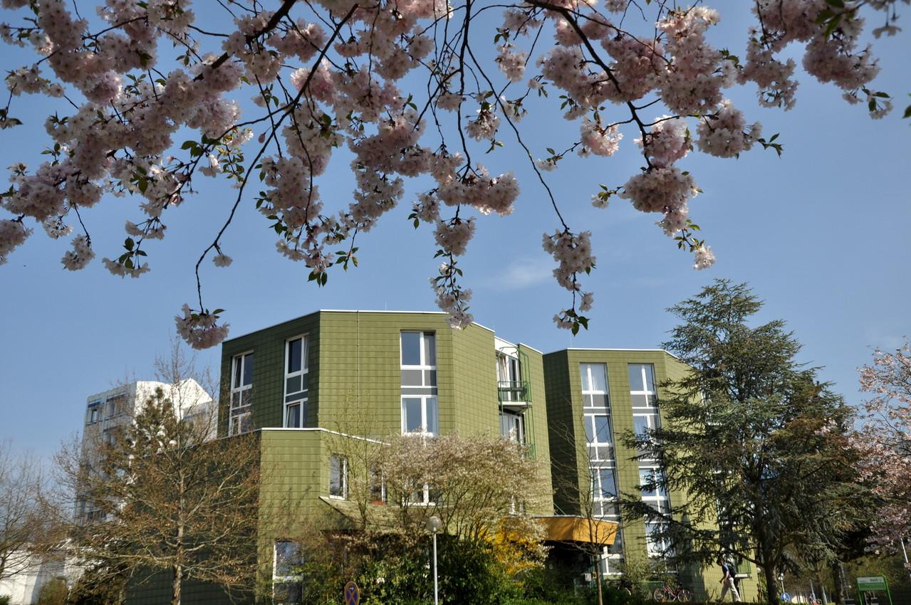 Haus 8 - Quelle: Studiwerk Trier