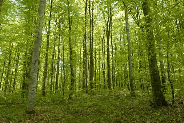 Promenade en forêt d'Argonne